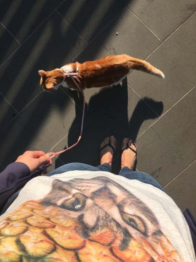 gatos australia